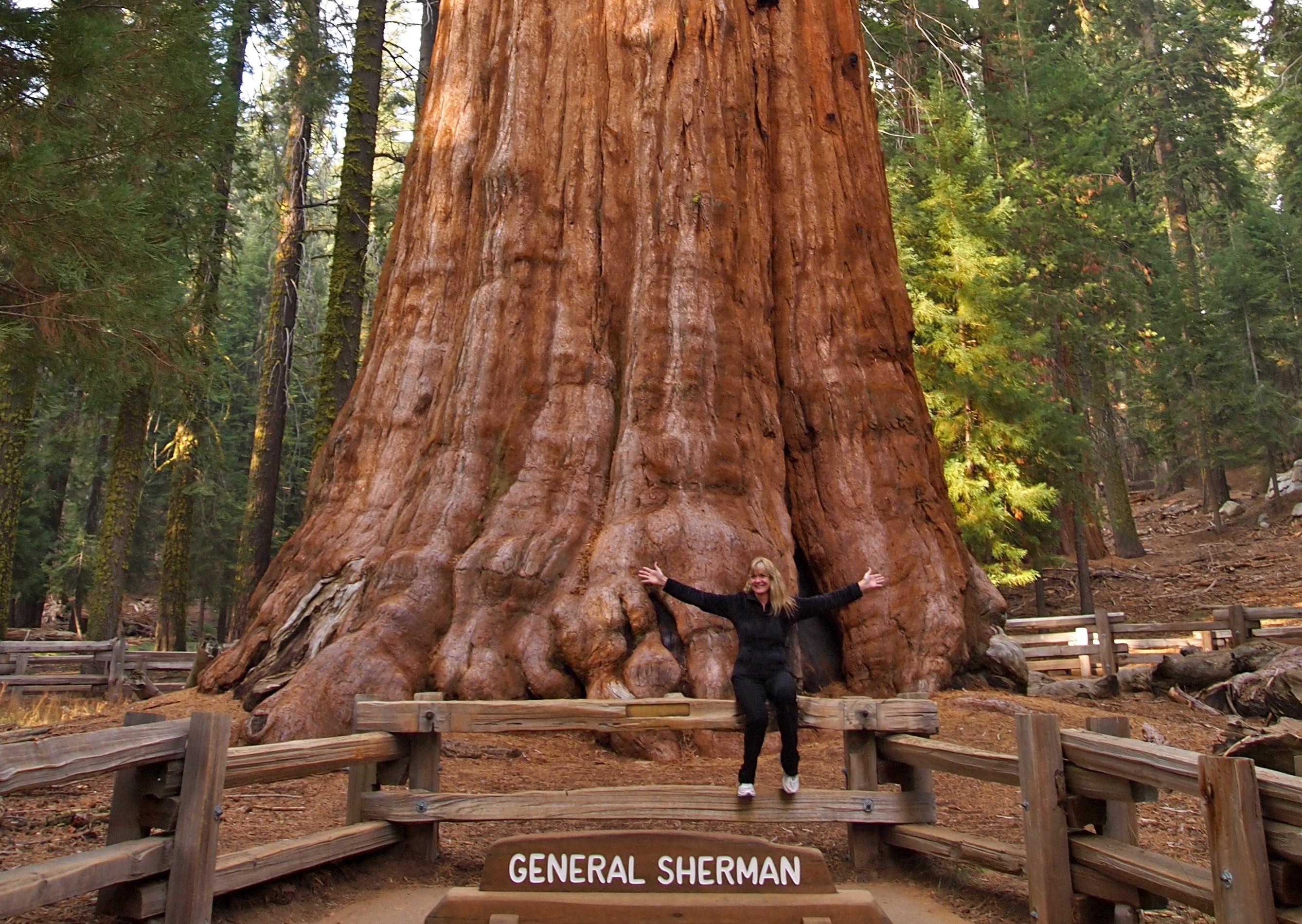Extrêmement Sequoia National Park, California | Fabulous 50's NA72