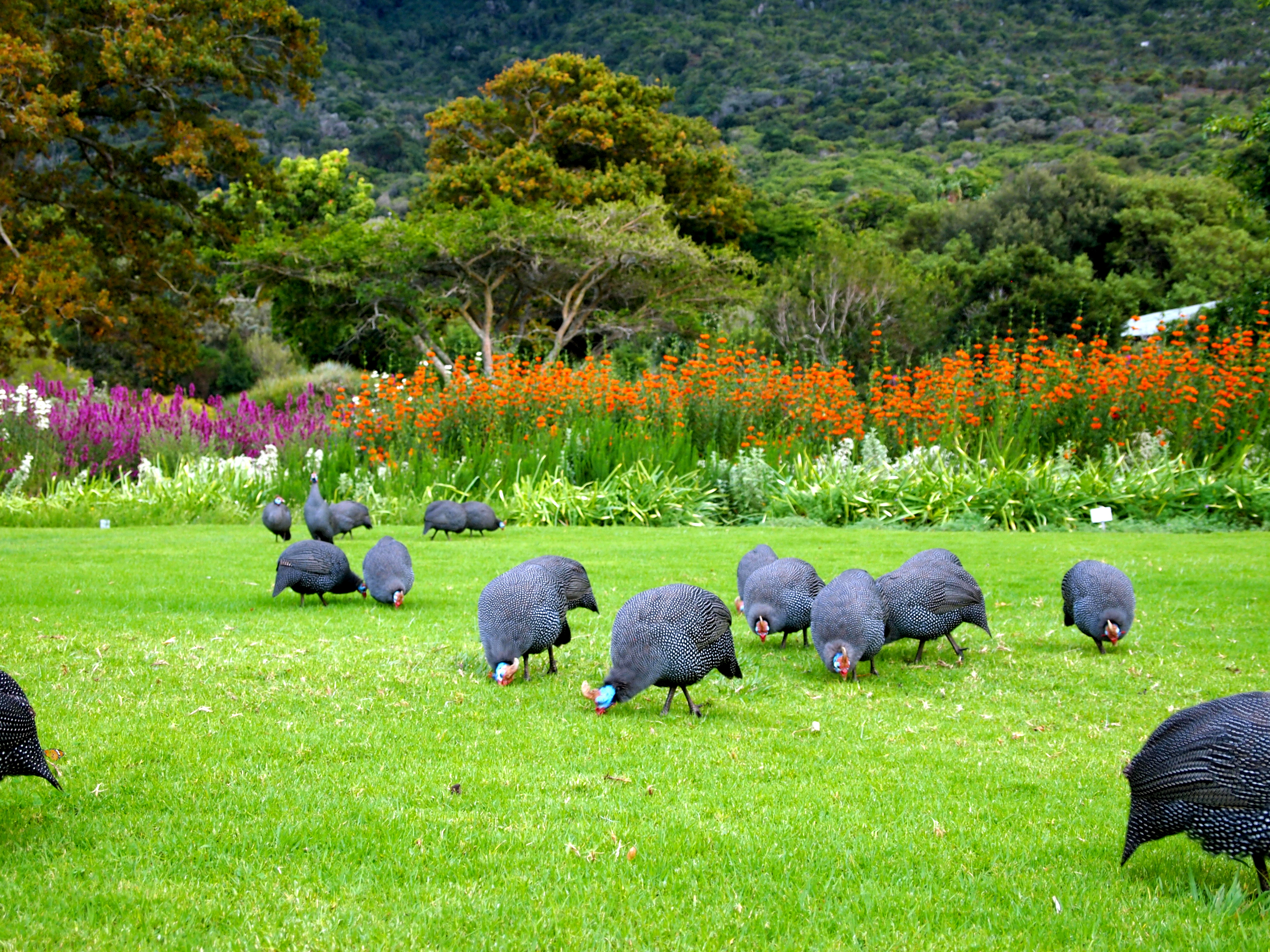 I Highly Recommend Seeing The Kirstenbosch Botanical ...