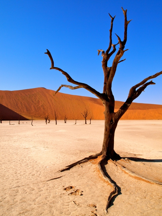 Deadvlei in Namib Desert
