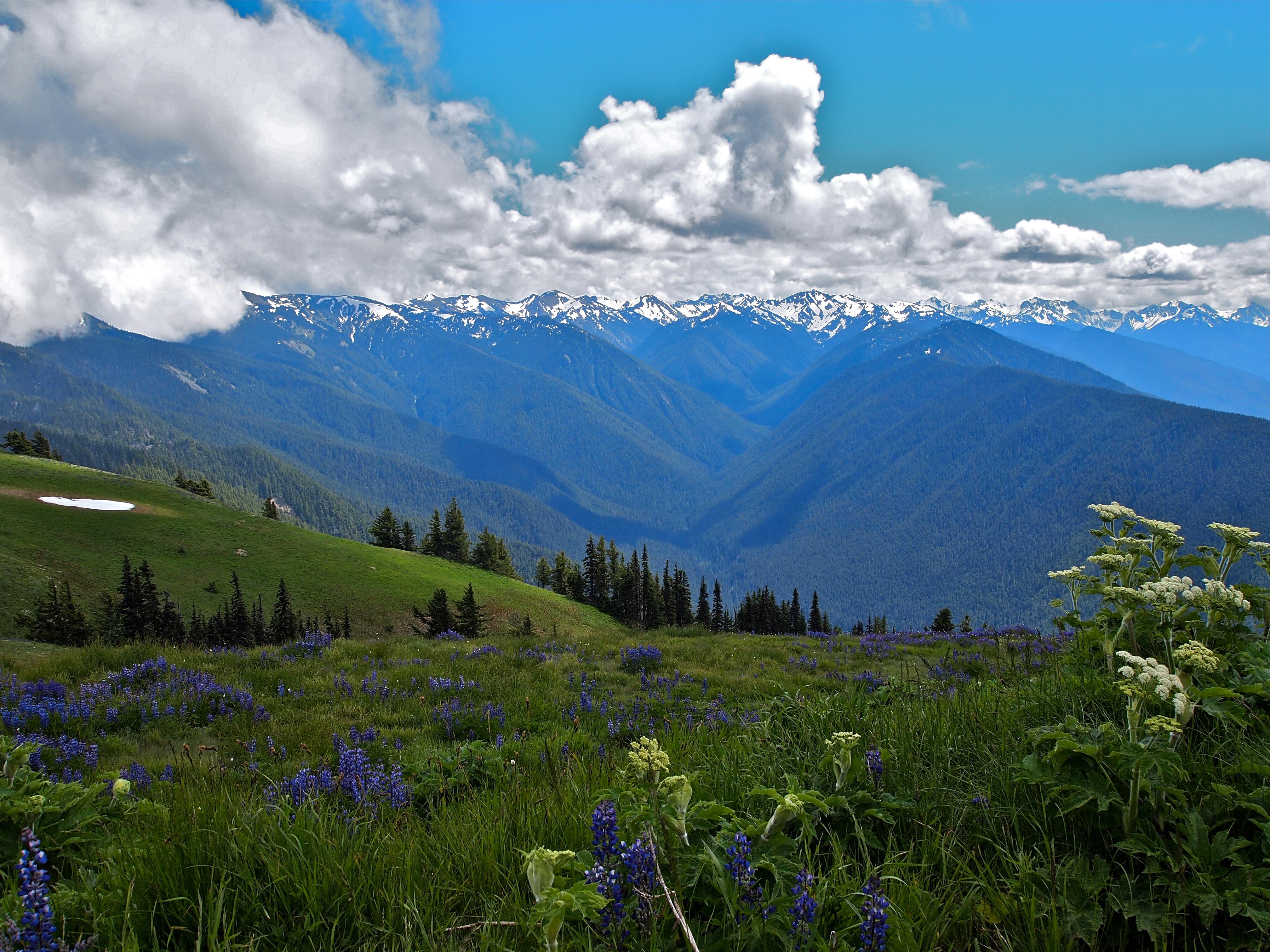 Hiking Olympic National Park Washington Fabulous 50 S