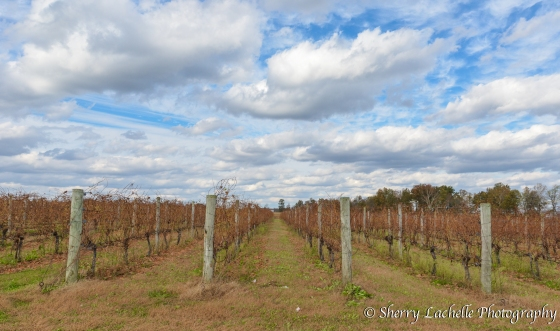 Vineyards at Meranda-Nixon Winery