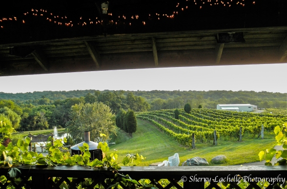 Picturesque view of rolling vineyards at Vinoklet Winery